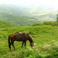 Nagorno-Karabakh Republic - Small glade near Gtichvank monastery Нагорно-Карабахская республика - Поляна перед монастырём Гтичванк, Закаталы