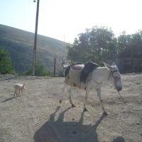 Работяга и его маленькие друзья из Красного базара, Арцах, Казах