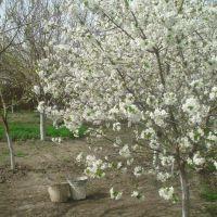 16.04.2011 Bərdə, Казах