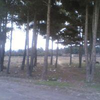 Aslanduz Qaraqabağ, Физули