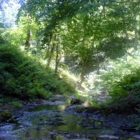 Forest spring, Биласувар