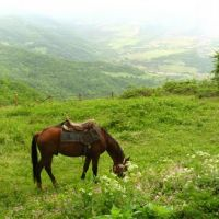 Nagorno-Karabakh Republic - Small glade near Gtichvank monastery Нагорно-Карабахская республика - Поляна перед монастырём Гтичванк, Алунитаг