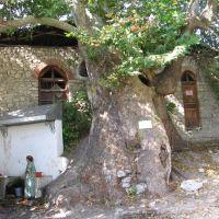 Holly Tree, Алунитаг
