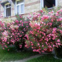 My house, Белоканы