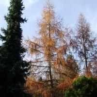 Avasi arborétum 3. (Arboretum on Avas-hill 3), Мишкольц