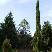 Avasi arborétum 7. (Arboretum on Avas-hill 7), Мишкольц