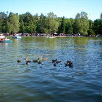 Csónakázó tó, Дебрецен