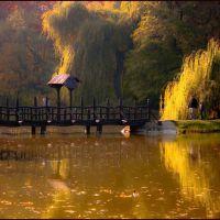 őszi álomkép, Дебрецен