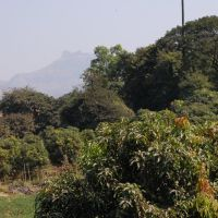 DPAK MALHOTRA, Palm Tree, NH4 Durtagati Marg - Mumbai Pune xpressway, Maharashtra, Bharat, Ашт
