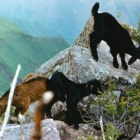 высокогорное пастбище, Наугарзан