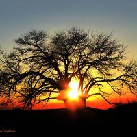 غروب و درخت, Душак