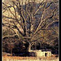 شکوهِ درخت, Душак