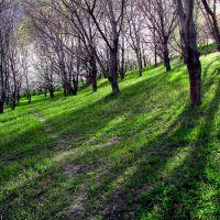 باغی در نزدیکی قلعه ماد, Душак