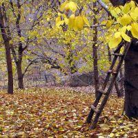 Autumn Garden, Душак