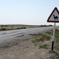 Dinosaur / Turkmenistan, Karakum Desert, Джебел