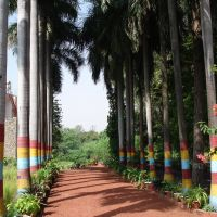 Make over of palm trees in Picnic spot of Lucknow., Кара-Кала