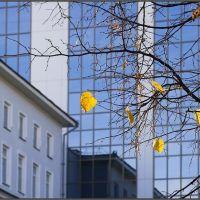 Последние листья, Уфра