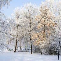 Зима в парке, Уфра