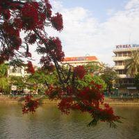 Hoa phượng vĩ bên  sông Lấp Hải phòng, Хайфон