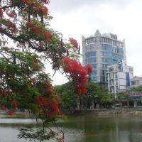 Hoa phượng vĩ bên sông Lấp Hải phòng., Хайфон