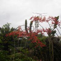 Hoa phong lan-Phượng vĩ, Хайфон