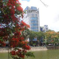 Hoa phượng vĩ bên bờ hồ sông Lấp Hải phòng, Хайфон