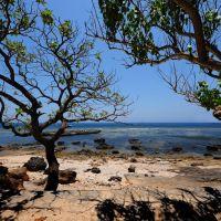 Cây phong ba trước biển, Вунг-Тау