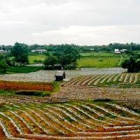 Rẫy, Пхан-Тхит