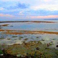 Bãi triều ở phía Tây Bắc đảo Lý Sơn, Винь