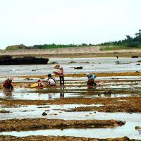 Bãi triều ở phía Đông Bắc đảo Lý Sơn, Винь