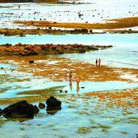 Bãi triều phía Bắc đảo Lý Sơn, Винь