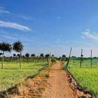 Garlic &Onion Fields - Cánh đồng Tỏi và Hành, Винь