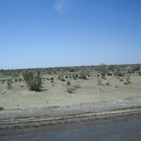 Désert Kizyl Koum   -  Uzbekistan, Алат