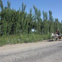 Дорога Джигачи-Каракуль, Газли