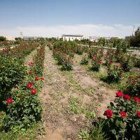Roses, Гиждуван