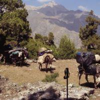 Arrivée de nos ânes au campement (près du lac dAlaoudine), Заамин