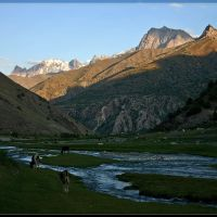 River Pasrud, Заамин