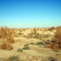 Растительность пустыни, Тахиаташ