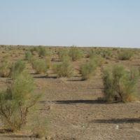 steppes dAsie centrale (entre Boukhara et Karshi, Касан