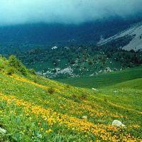 поле цветущих кувшинок, Касансай