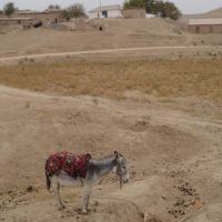 usbek landscape, Ингичка