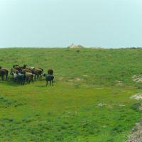 Au bord de la route A 378 de Chakhbrisak à Samarcande, berger et son troupeau de moutons, Ингичка