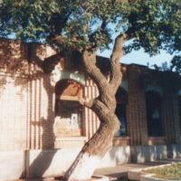 Twirling Tree near the Bazaar / Skręcone drzewo przy bazarze, Самарканд