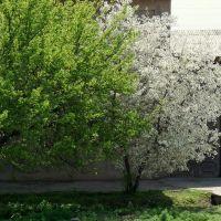 Весенние наряды. Аttired in spring colors., Бука
