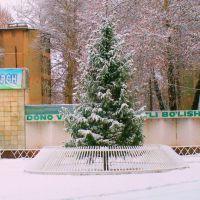 живая новогодняя елка, Газалкент