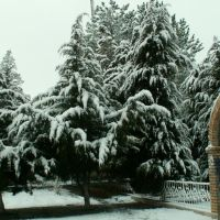 елки на центральной площади, Газалкент
