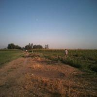 в поле, Янгибазар