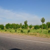 on the way to Tashkent Mountains May 2010, Янгибазар