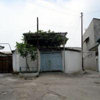 kokand, Дангара