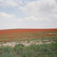 Kyzyl-Kiya, road to Abshir, spring, poppy, Кува